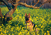 DOG 01 RK0461 08