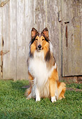 DOG 01 RK0525 04