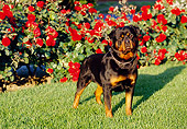 DOG 01 RK0640 08