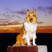 DOG 01 RK0647 01