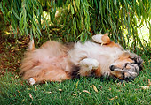 DOG 01 RK0695 02