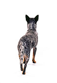 DOG 01 RK0707 02