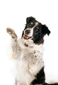 DOG 01 RK0712 03