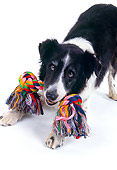 DOG 01 RK0714 07