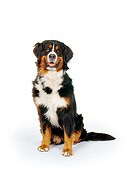 DOG 01 RK0720 04