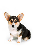 DOG 01 RK0723 03