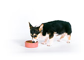 DOG 01 RK0727 04