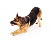 DOG 01 RK0737 01