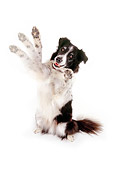 DOG 01 RK0809 01