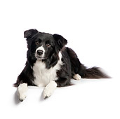 DOG 01 RK0810 01