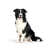 DOG 01 RK0815 01