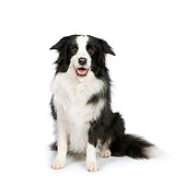 DOG 01 RK0819 01