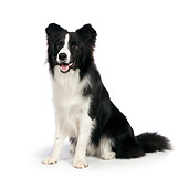 DOG 01 RK0821 01