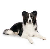 DOG 01 RK0823 01