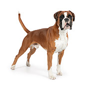 DOG 01 RK0828 01