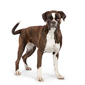 DOG 01 RK0830 01