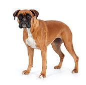 DOG 01 RK0833 01