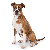 DOG 01 RK0835 01