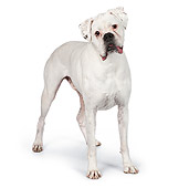 DOG 01 RK0837 01