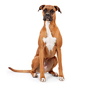 DOG 01 RK0838 01