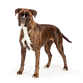 DOG 01 RK0840 01