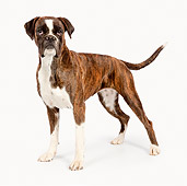 DOG 01 RK0845 01