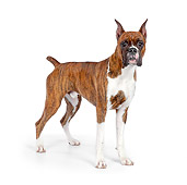 DOG 01 RK0849 01