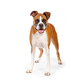 DOG 01 RK0856 01
