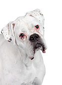 DOG 01 RK0858 01