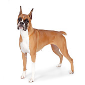 DOG 01 RK0860 01