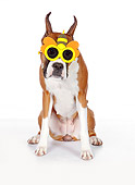 DOG 01 RK0864 01