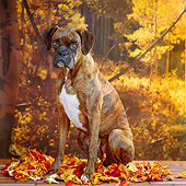 DOG 01 RS0031 05