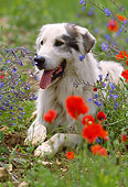 DOG 01 SS0003 01