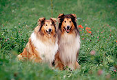 DOG 01 SS0006 01