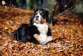 DOG 01 SS0008 01