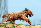 DOG 01 SS0014 01