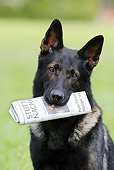 DOG 01 SS0015 01