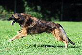 DOG 01 SS0020 01