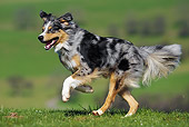DOG 01 SS0025 01
