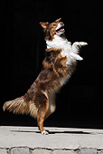 DOG 01 SS0026 01