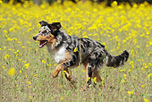 DOG 01 SS0031 01