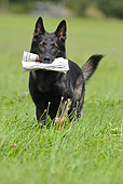 DOG 01 SS0035 01