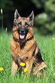 DOG 01 SS0037 01