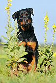 DOG 01 SS0039 01