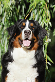 DOG 01 SS0044 01