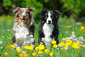 DOG 01 SS0047 01
