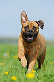 DOG 01 SS0050 01
