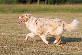 DOG 01 WF0002 01