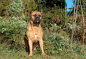 DOG 01 CE0001 01