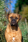 DOG 01 CE0002 01